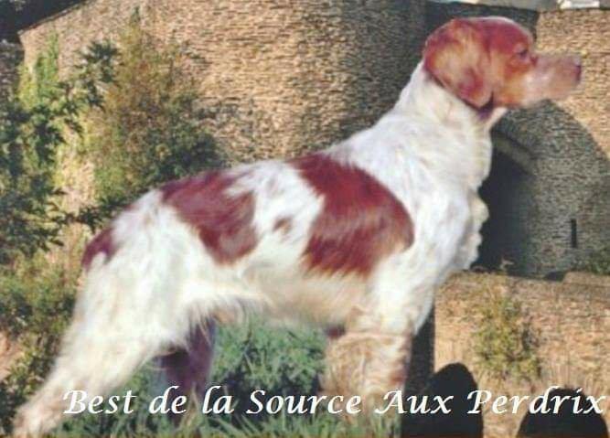 Best de la Source Aux Perdix